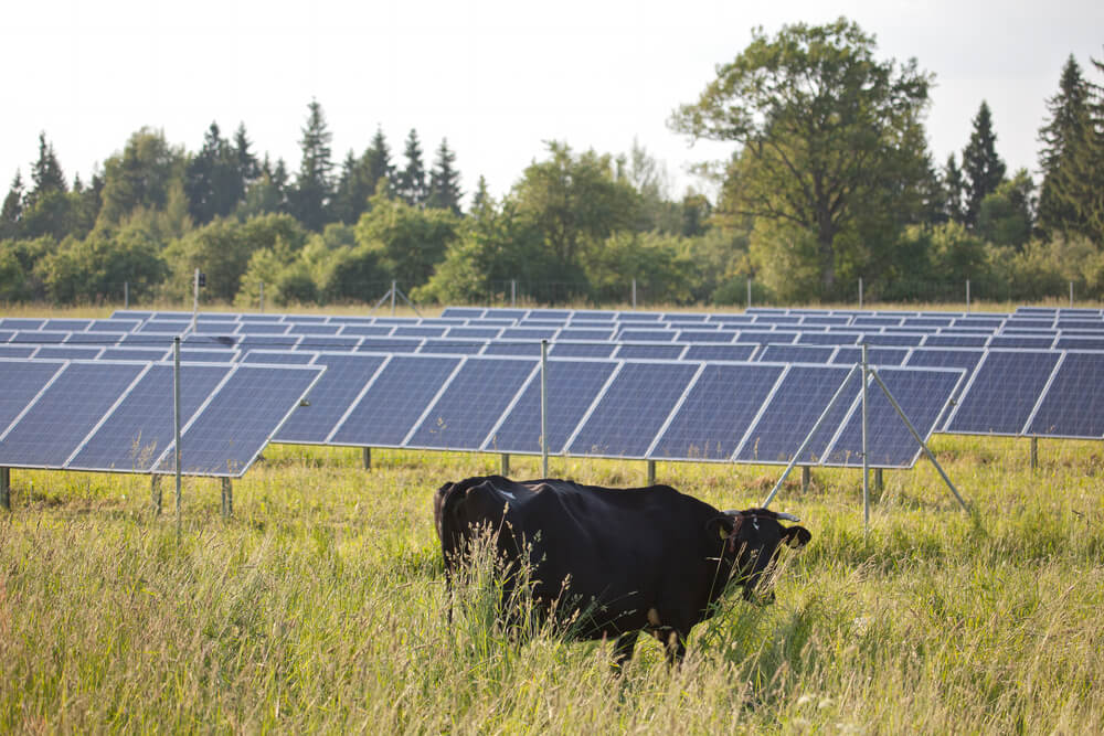 Commercial on grid solar power solar electric technology for Solar ranch
